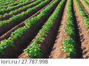 Купить «potato field», фото № 27787998, снято 19 апреля 2018 г. (c) PantherMedia / Фотобанк Лори