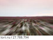 Купить «Lake of red lotus with radial blurred background», фото № 27788794, снято 19 января 2019 г. (c) PantherMedia / Фотобанк Лори