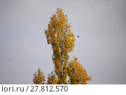 Купить «brown yellow tree brunette trees», фото № 27812570, снято 21 февраля 2019 г. (c) PantherMedia / Фотобанк Лори