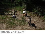 Купить «goat enclosure», фото № 27815074, снято 24 марта 2018 г. (c) PantherMedia / Фотобанк Лори
