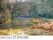 Купить «Misty forest surrounding little swamp», фото № 27818082, снято 17 июня 2019 г. (c) PantherMedia / Фотобанк Лори