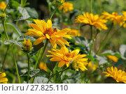 Купить «green close up summer yellow», фото № 27825110, снято 14 ноября 2018 г. (c) PantherMedia / Фотобанк Лори