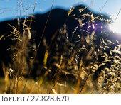 Купить «Horizontal vivid vibrant yellow Norway grass landscape backgroun», фото № 27828670, снято 19 марта 2019 г. (c) PantherMedia / Фотобанк Лори