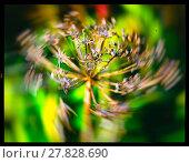 Купить «Horizontal vivid yellow nature plant closeup macro on green boke», фото № 27828690, снято 23 июля 2018 г. (c) PantherMedia / Фотобанк Лори