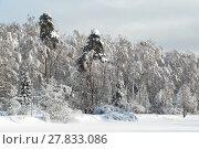 Зимний лес (2018 год). Редакционное фото, фотограф Вера Чумакова / Фотобанк Лори