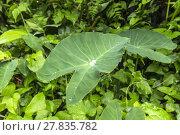 Купить «leaf in rain forest with a drop of water», фото № 27835782, снято 17 июня 2019 г. (c) PantherMedia / Фотобанк Лори