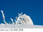 Rime frosting trees on blue sky background. Стоковое фото, фотограф Юрий Брыкайло / Фотобанк Лори
