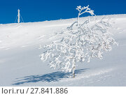 Купить «Winter hoar frosting trees, tower and snowdrifts (Carpathian mountain, Ukraine)», фото № 27841886, снято 23 января 2018 г. (c) Юрий Брыкайло / Фотобанк Лори