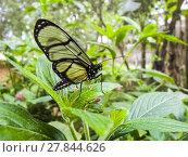 Купить «butterfly in the jungle of equador», фото № 27844626, снято 23 марта 2019 г. (c) PantherMedia / Фотобанк Лори
