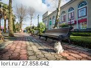 Купить «Кот в Сочи A white fluffy cat in Sochi», фото № 27858642, снято 20 января 2018 г. (c) Baturina Yuliya / Фотобанк Лори