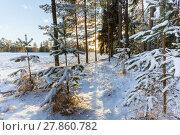 Купить «Зимний пейзаж с заснеженными деревьями на краю поля», фото № 27860782, снято 8 января 2018 г. (c) Сергей Васильев / Фотобанк Лори