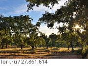 Купить «Cork oak trees, Portugal», фото № 27861614, снято 2 июня 2017 г. (c) Знаменский Олег / Фотобанк Лори