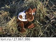 Купить «moose in the straw», фото № 27861986, снято 26 мая 2018 г. (c) PantherMedia / Фотобанк Лори
