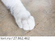 Купить «Relaxing cat's pawn at home», фото № 27862462, снято 22 июля 2018 г. (c) PantherMedia / Фотобанк Лори
