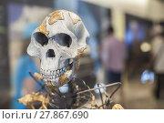 Купить «Lucy skeleton», фото № 27867690, снято 16 октября 2019 г. (c) PantherMedia / Фотобанк Лори