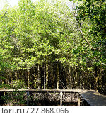 Купить «forest mangrove and the bridge», фото № 27868066, снято 22 июля 2019 г. (c) PantherMedia / Фотобанк Лори