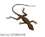 lizard hovel insectivorous poikilotherm saurian. Стоковое фото, фотограф Norbert Dr. Lange / PantherMedia / Фотобанк Лори