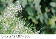 Купить «Herbal plant», фото № 27874866, снято 19 августа 2018 г. (c) PantherMedia / Фотобанк Лори