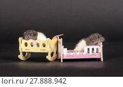 Купить «Rats in a toy beds», фото № 27888942, снято 26 марта 2013 г. (c) Argument / Фотобанк Лори