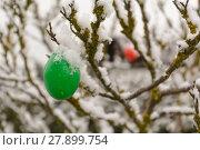 Купить «verschneite Ostereier auf einem Baum», фото № 27899754, снято 27 марта 2019 г. (c) PantherMedia / Фотобанк Лори