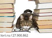 Купить «Cat sitting in the house of books», фото № 27900862, снято 28 ноября 2017 г. (c) Okssi / Фотобанк Лори
