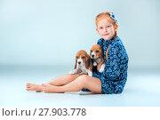 Купить «The happy girl and two beagle puppie on gray background», фото № 27903778, снято 20 июня 2019 г. (c) PantherMedia / Фотобанк Лори