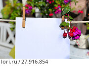 Купить «sheet of paper on clothesline in front of colorful flowers», фото № 27916854, снято 20 марта 2019 г. (c) PantherMedia / Фотобанк Лори