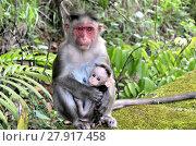 Купить «Baby monkey feels protected and comfortable in mother's hands», фото № 27917458, снято 13 ноября 2019 г. (c) PantherMedia / Фотобанк Лори