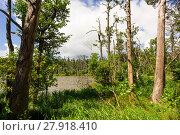Купить «slowinski landscape», фото № 27918410, снято 22 ноября 2019 г. (c) PantherMedia / Фотобанк Лори