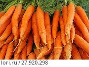 Купить «carrots carrots carrots at the farmers market», фото № 27920298, снято 6 июля 2020 г. (c) PantherMedia / Фотобанк Лори