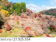 Купить «Nagoya, Obara Sakura in autumn», фото № 27925554, снято 10 апреля 2020 г. (c) easy Fotostock / Фотобанк Лори