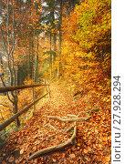 Купить «Beautiful autumn scene invites to walk.on a misty footpath in the forest.», фото № 27928294, снято 10 декабря 2018 г. (c) PantherMedia / Фотобанк Лори