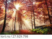 Купить «fascinating light mood in a colorful forest in autumn with sunshine in the fog», фото № 27929798, снято 18 марта 2018 г. (c) PantherMedia / Фотобанк Лори