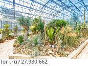 Купить «Palm tree and cactus», фото № 27930662, снято 19 февраля 2018 г. (c) PantherMedia / Фотобанк Лори