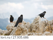 Купить «Crows on the Mountain», фото № 27935686, снято 19 марта 2019 г. (c) PantherMedia / Фотобанк Лори