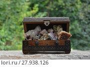 Купить «many minerals quartz and crystal stones in wooden box », фото № 27938126, снято 20 июля 2018 г. (c) PantherMedia / Фотобанк Лори