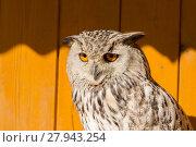 Купить «Eurasian Eagle Owl (Bubo bubo)», фото № 27943254, снято 26 мая 2019 г. (c) PantherMedia / Фотобанк Лори