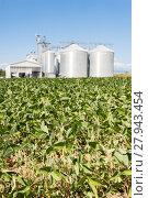 Купить «Soybean field in a sunny day», фото № 27943454, снято 16 июля 2019 г. (c) PantherMedia / Фотобанк Лори