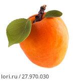 Купить «Спелый абрикос с зелёным листиком изолированно на белом фоне», фото № 27970030, снято 12 июля 2013 г. (c) Литвяк Игорь / Фотобанк Лори