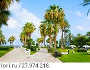 Купить «Paphos, Cyprus - July 20, 2017: Palm beach with empty sunbeds against Constantinou Bros Athena Beach Hotel. The hotel was fully refurbished in the winter of 10/11», фото № 27974218, снято 20 июля 2017 г. (c) Papoyan Irina / Фотобанк Лори