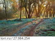 Купить «Autumn morning landscape», фото № 27984254, снято 21 мая 2019 г. (c) PantherMedia / Фотобанк Лори