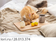 Купить «red tabby cat sniffing food on bed at home», фото № 28013374, снято 15 ноября 2017 г. (c) Syda Productions / Фотобанк Лори