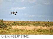 Купить «cranes land», фото № 28018842, снято 27 мая 2019 г. (c) PantherMedia / Фотобанк Лори