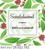 Купить «Sandalwood essential oil», фото № 28022182, снято 17 ноября 2018 г. (c) PantherMedia / Фотобанк Лори