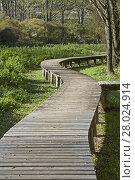 Купить «in the biotope on lake terlago», фото № 28024914, снято 22 апреля 2019 г. (c) PantherMedia / Фотобанк Лори