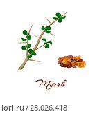 Купить «Myrrh. Commiphora myrrha.», фото № 28026418, снято 22 сентября 2019 г. (c) PantherMedia / Фотобанк Лори