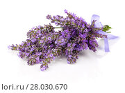 Купить «lavender flowers», фото № 28030670, снято 25 февраля 2018 г. (c) PantherMedia / Фотобанк Лори