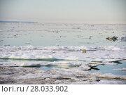 Купить «Polar bear walking on sea ice», фото № 28033902, снято 26 марта 2019 г. (c) PantherMedia / Фотобанк Лори