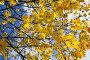 Купить «yellowing leaves on the trees», фото № 28040374, снято 20 февраля 2018 г. (c) PantherMedia / Фотобанк Лори