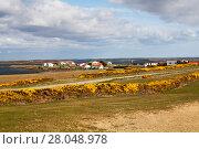 Купить «Goose Green town, East Falkland, Falkland Islands, November 2015», фото № 28048978, снято 20 мая 2019 г. (c) Nature Picture Library / Фотобанк Лори